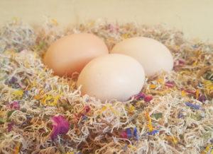 nesting-box-herbs