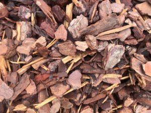 """1"""" Slash Pine"""